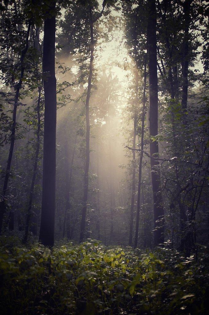 Grafenberger Wald